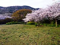 Photo3881